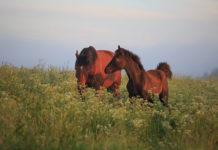 Jakie odżywki dla koni warto uwzględniać przy planowaniu diety?